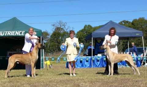 Mia aged 10 months winning runner-up Best In Specialty Show - NSW Great Dane Club - March 2006.