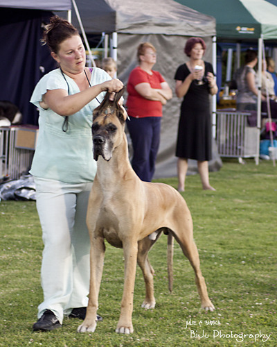 Annette & Omen South Eastern Kennel Club 2011